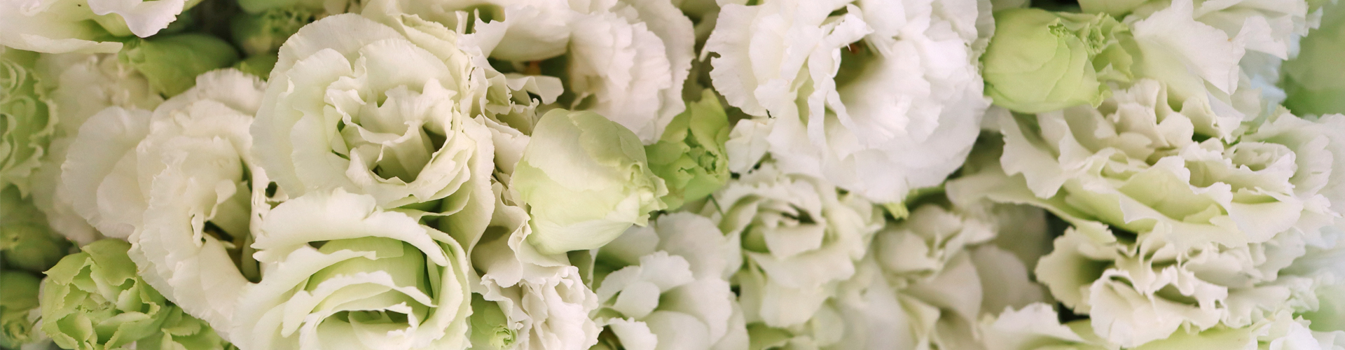 "<h1 style=""font-weight: 600"">flower</h1><br><p style=""line-height: 1.5;"">계절과 트랜드에 맞게 구성한 꽃을<br>집에서 편하게 만나보세요.</p>"