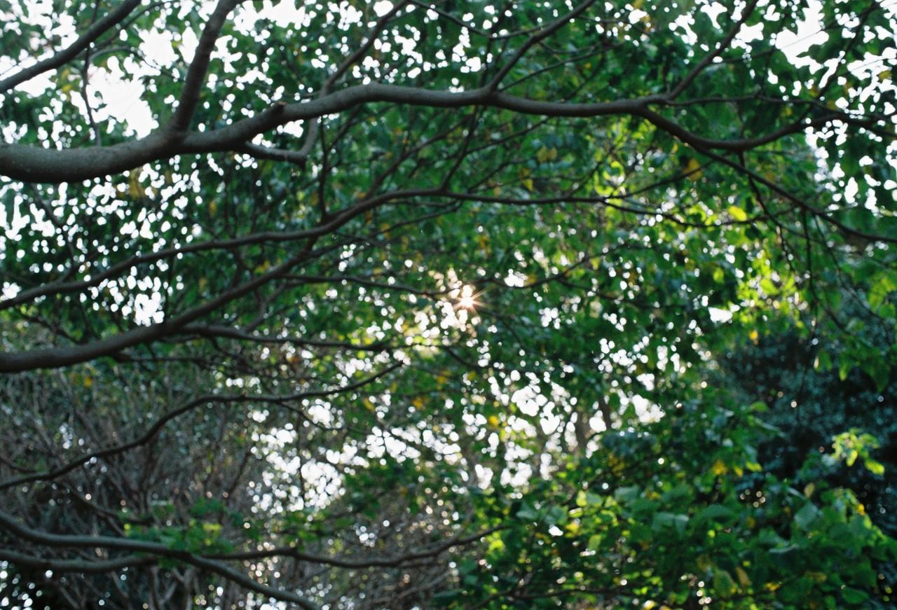 #4. 생각보다 오르는 길이 제법 가파르다. 강한 햇빛과 높은 구름을 바라보며 언덕을 오르는 게 덥게 느껴질 즈음 우거진 나무들이 초록색 터널을 만들어준다. 정오의 햇빛이 반투명한 나뭇잎에 부서지는 모습.