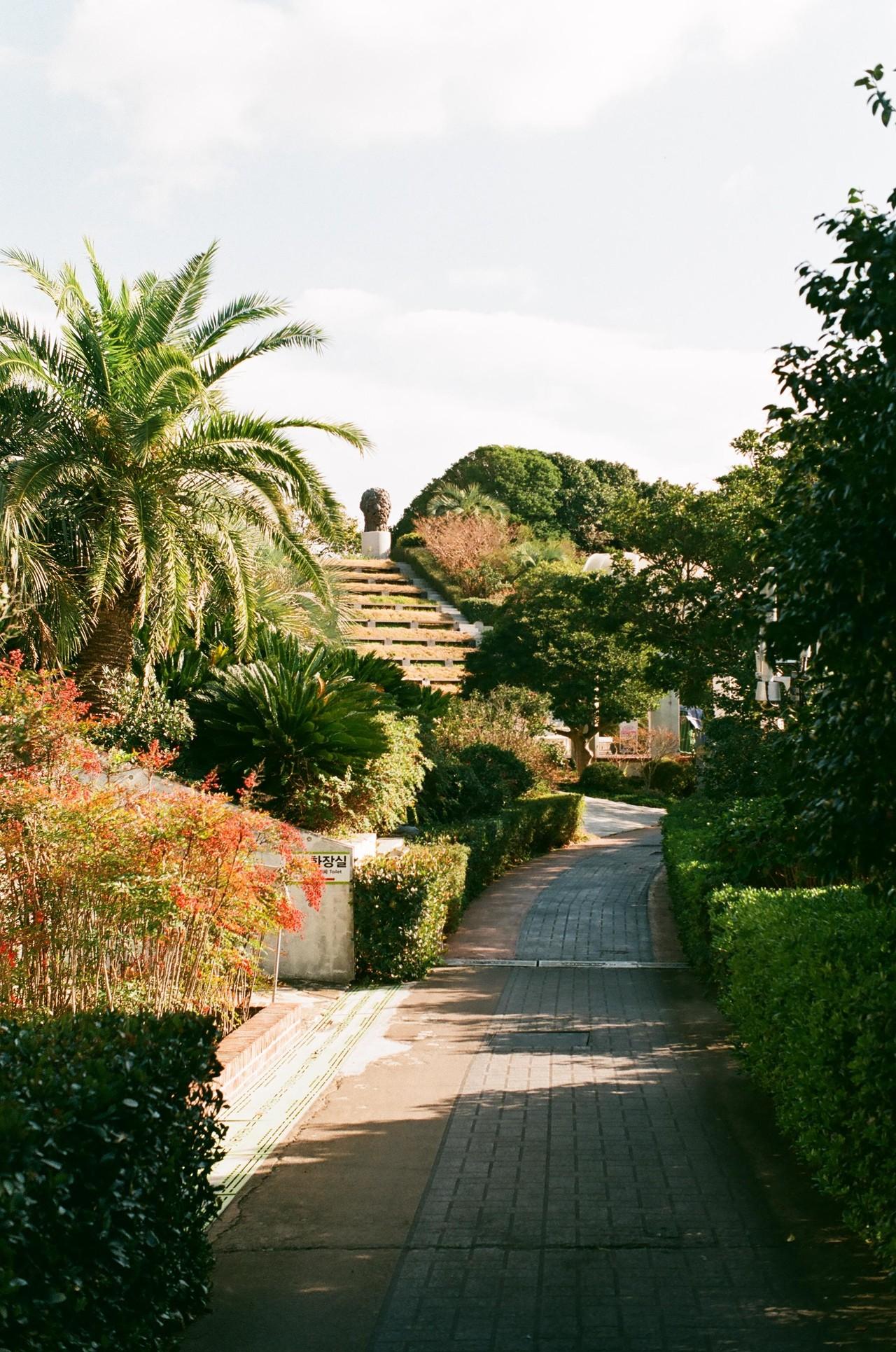 #2. 남해바다의 땅은, 특히나 섬들은 더 그렇지만 유난히 장사도는 이국적인 식생이 많이 자란다. 바람을 받으며 흔들리는 이름 모를 풀과 나무들이 마치 다른 세계에 와 있는 듯한 느낌을 주는 한 가지.
