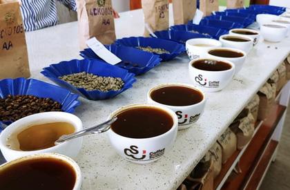 커피품질평가 80점이상의 우수생두만을 취급하는 비비컴플렉스