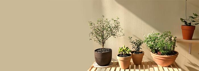 "<h2 style=""line-height: 0.3;"">plant</h2><br><p style=""line-height: 1.5;"">플랜테리어를 완성시켜줄 매력적인 식물<br>머무르는 공간에 싱그러움을 더해주세요.</p>"
