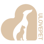 동물보호센터 유럽펫 보호소 - 유기묘보호센터 강아지임시보호 유기견분양 강아지파양