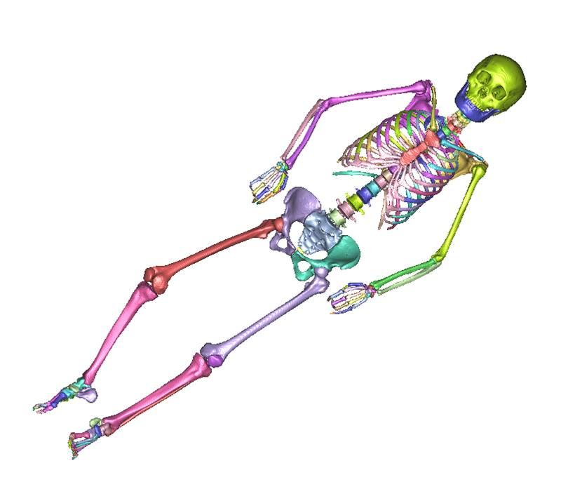 전신 뼈 3D Model