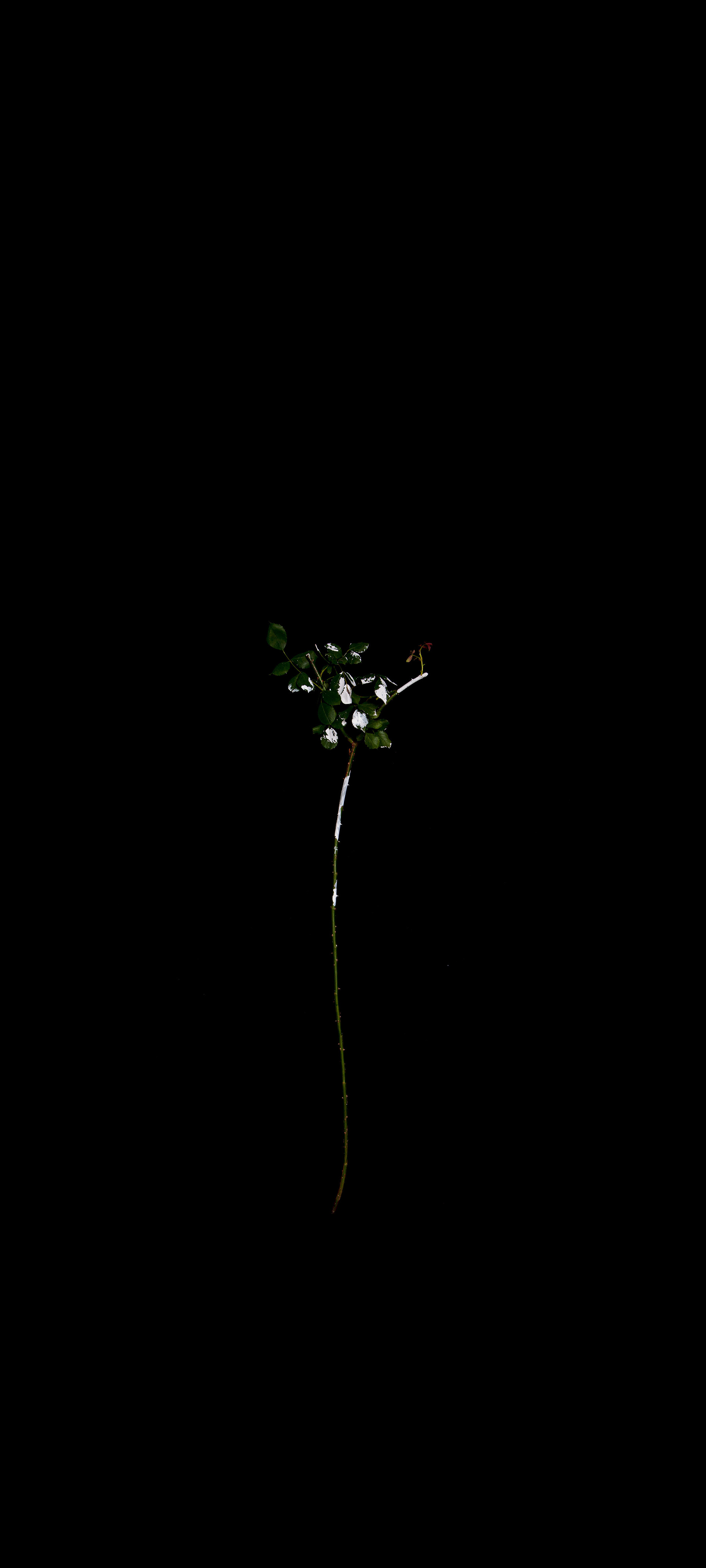 """Another White #1"" / 2020/ 180x400cm / print on film, light"