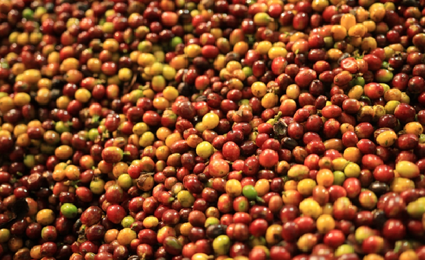 THE THIRD WAVE IN COFFEE INDUSTRY (커피산업의 제3의 물결)