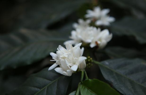 도이창 커피꽃꿀