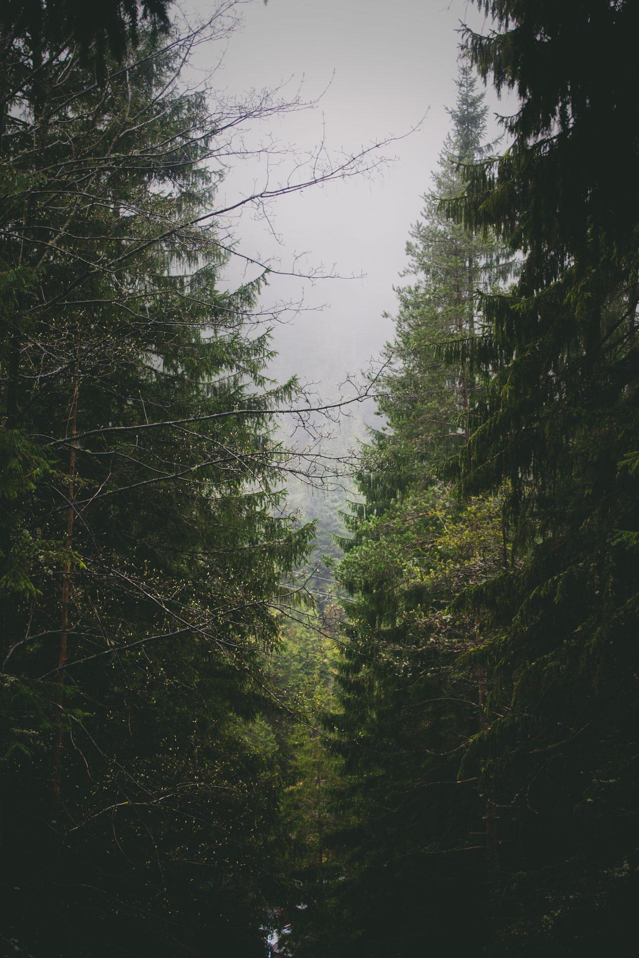 정서드라마  『나무의 속삭임』