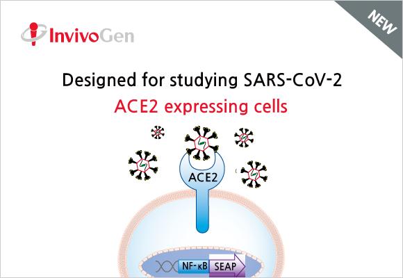 COVID-19 연구를 위한 Cell line
