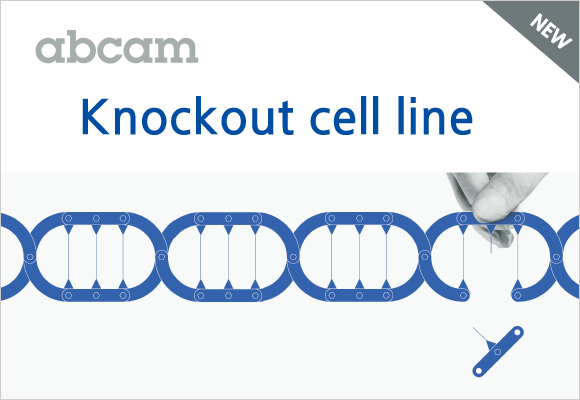 바로 실험에 적용할 수 있는 KO cell line