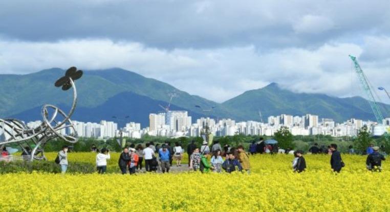 구리한강시민공원 유채꽃 축제