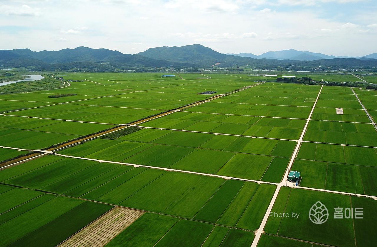 경북 의성군 서부에 위치한 곡창지대 안개평야(1000ha)