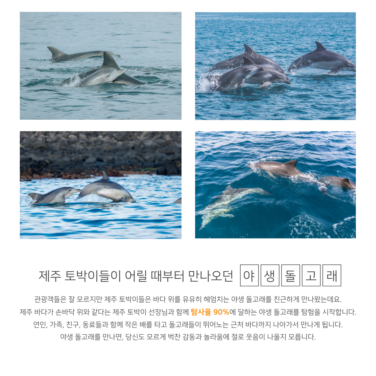 제주도 모슬포 앞바다는 야생 돌고래의 서식지입니다. 탐사율 90%에 달하는 야생 돌고래 탐사를 떠나보세요.