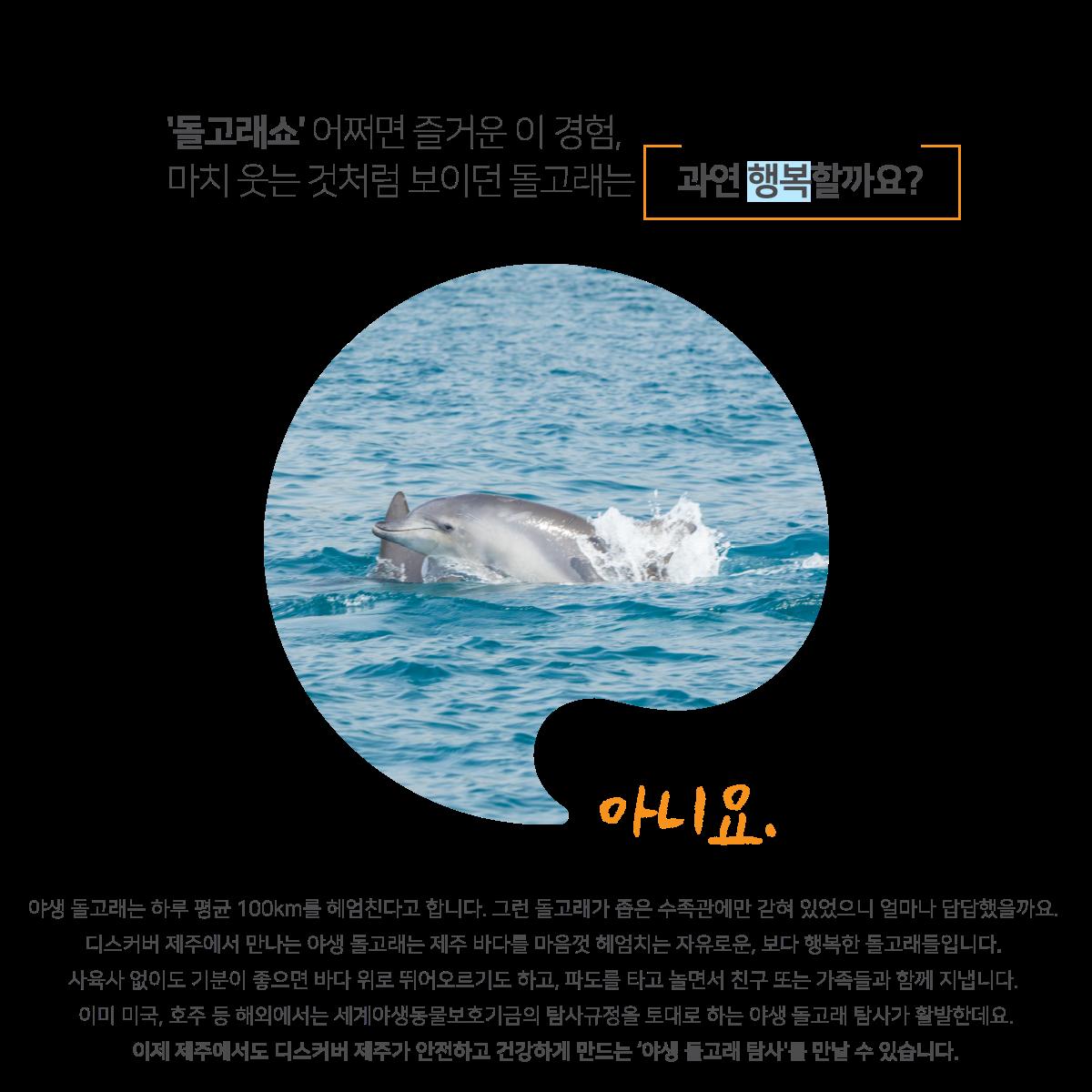 디스커버제주에서는 수조관 속에 갇혀있는 돌고래가 아닌 푸른 제주의 앞바다에서 자유롭게 뛰노는 야생 돌고래를 볼 수 있습니다.
