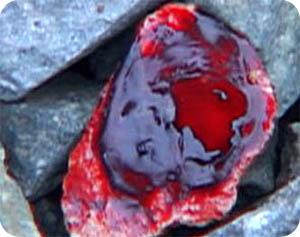 성혈조배실