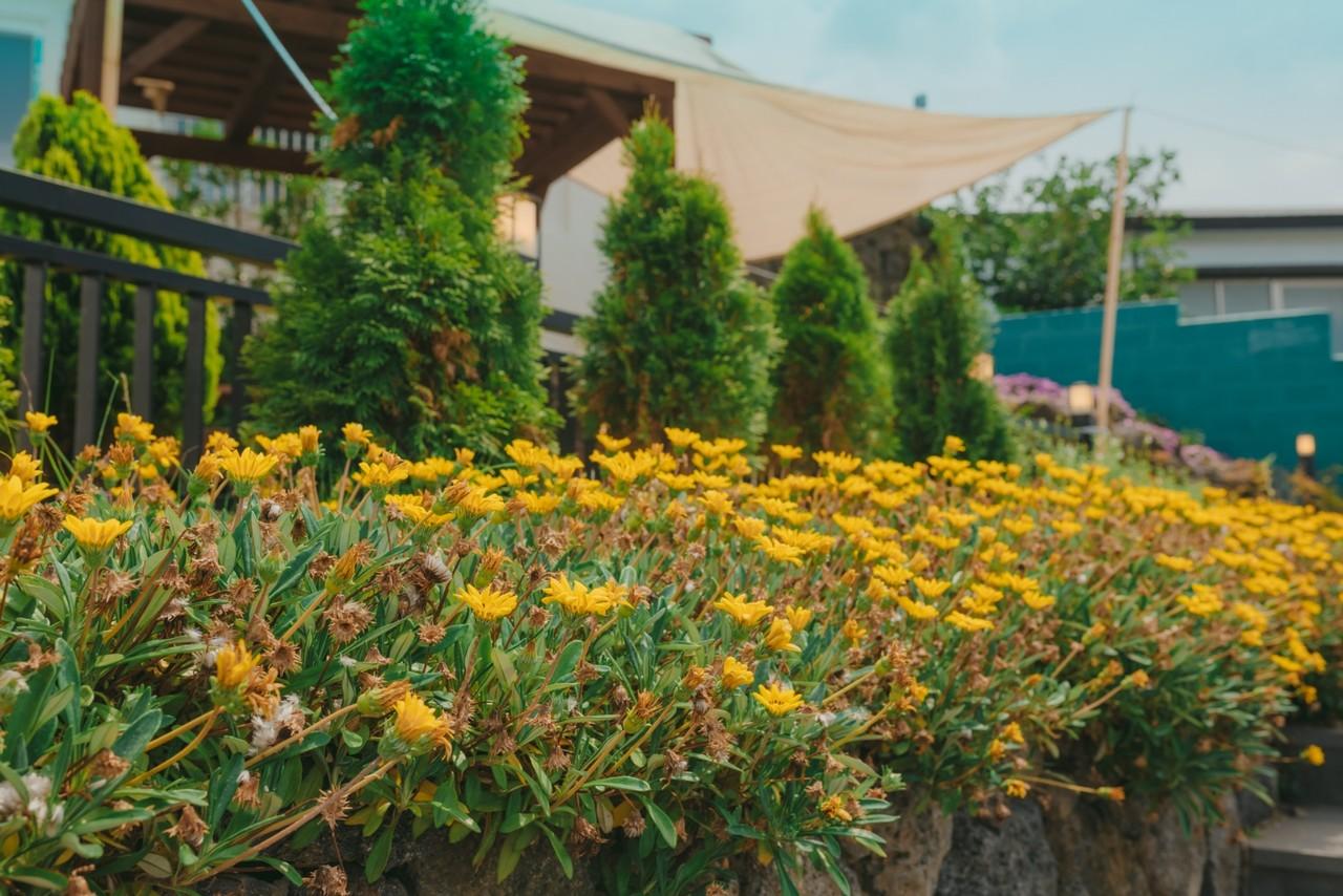 꽃이 피어있는 카페온 외부 전경