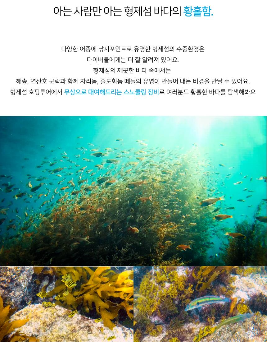 다양한 어종이 살고있는 형제섬은 아름다운 수중생물로 다이버들에게 잘 알려져 있습니다. 무상으로 제공하는 스노클링 장비로 아름다운 제주바다를 눈에 담아보세요.