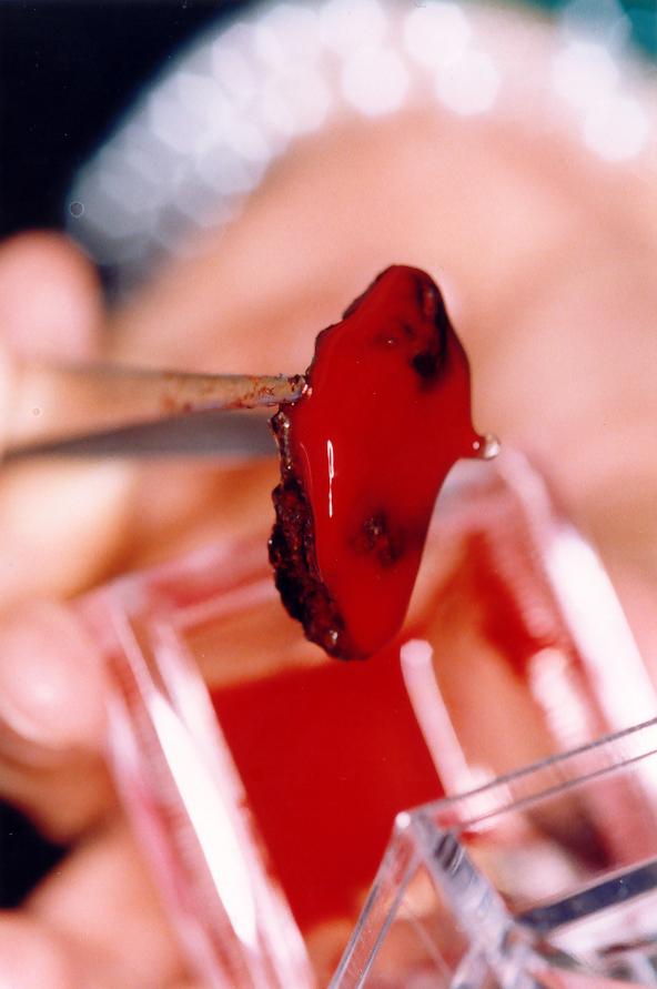 예수님 성혈