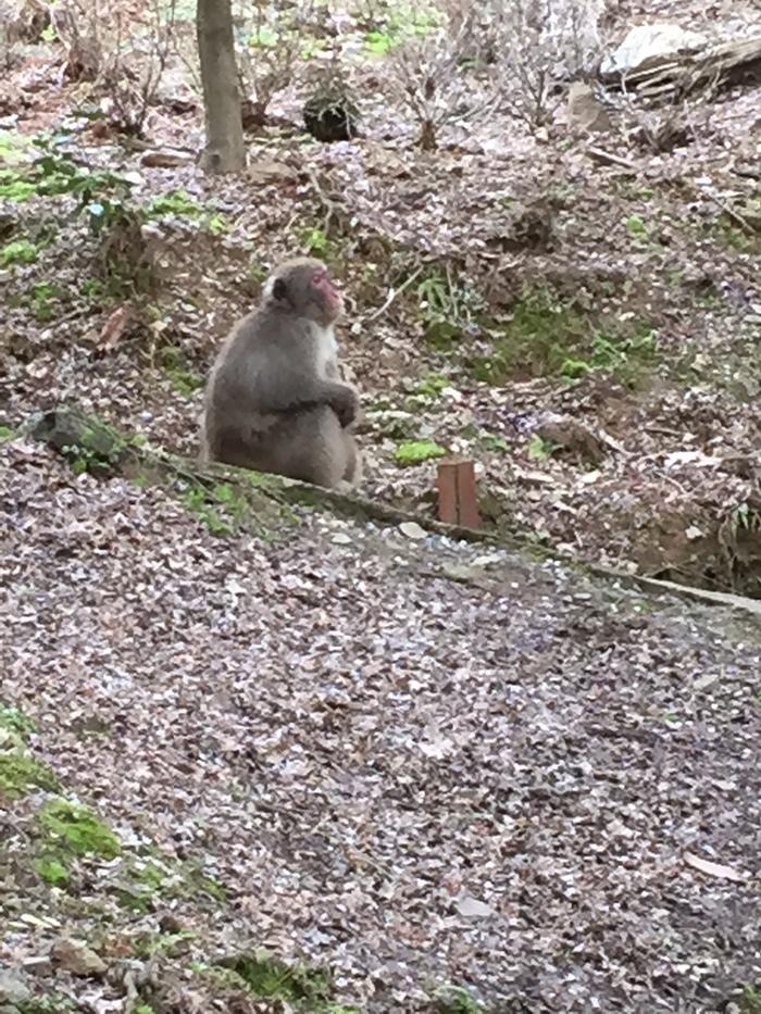 교토 원숭이