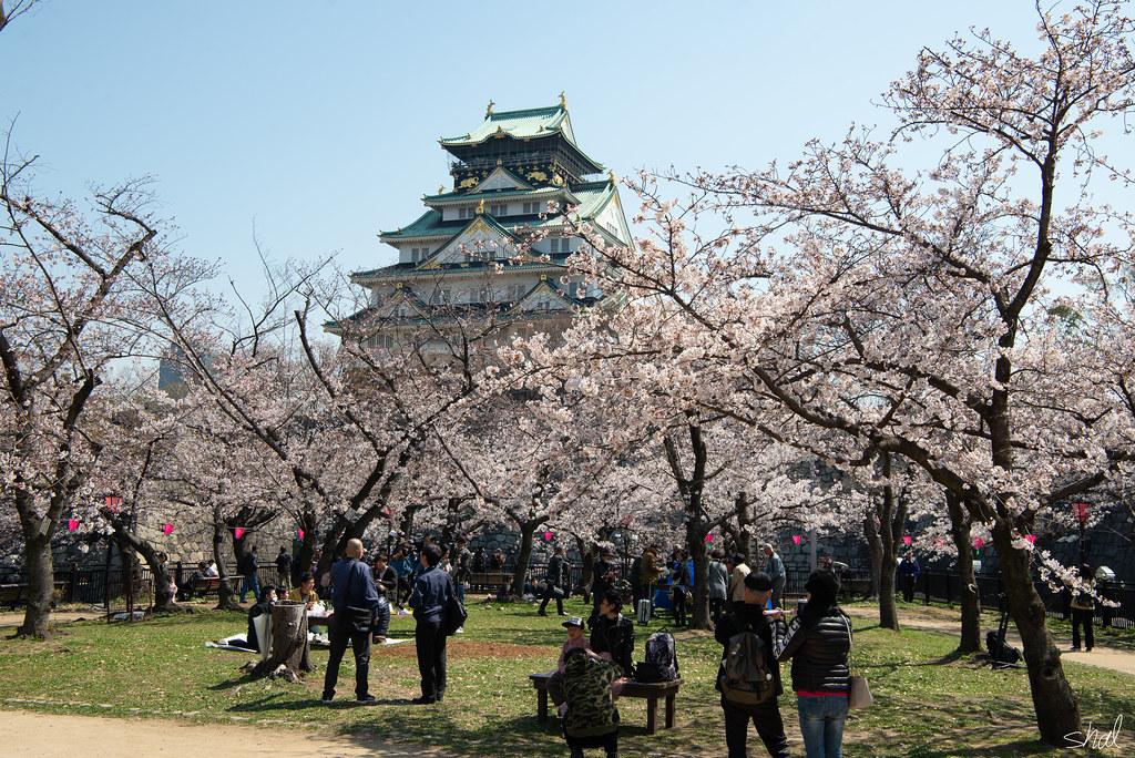 오사카 벚꽃공원