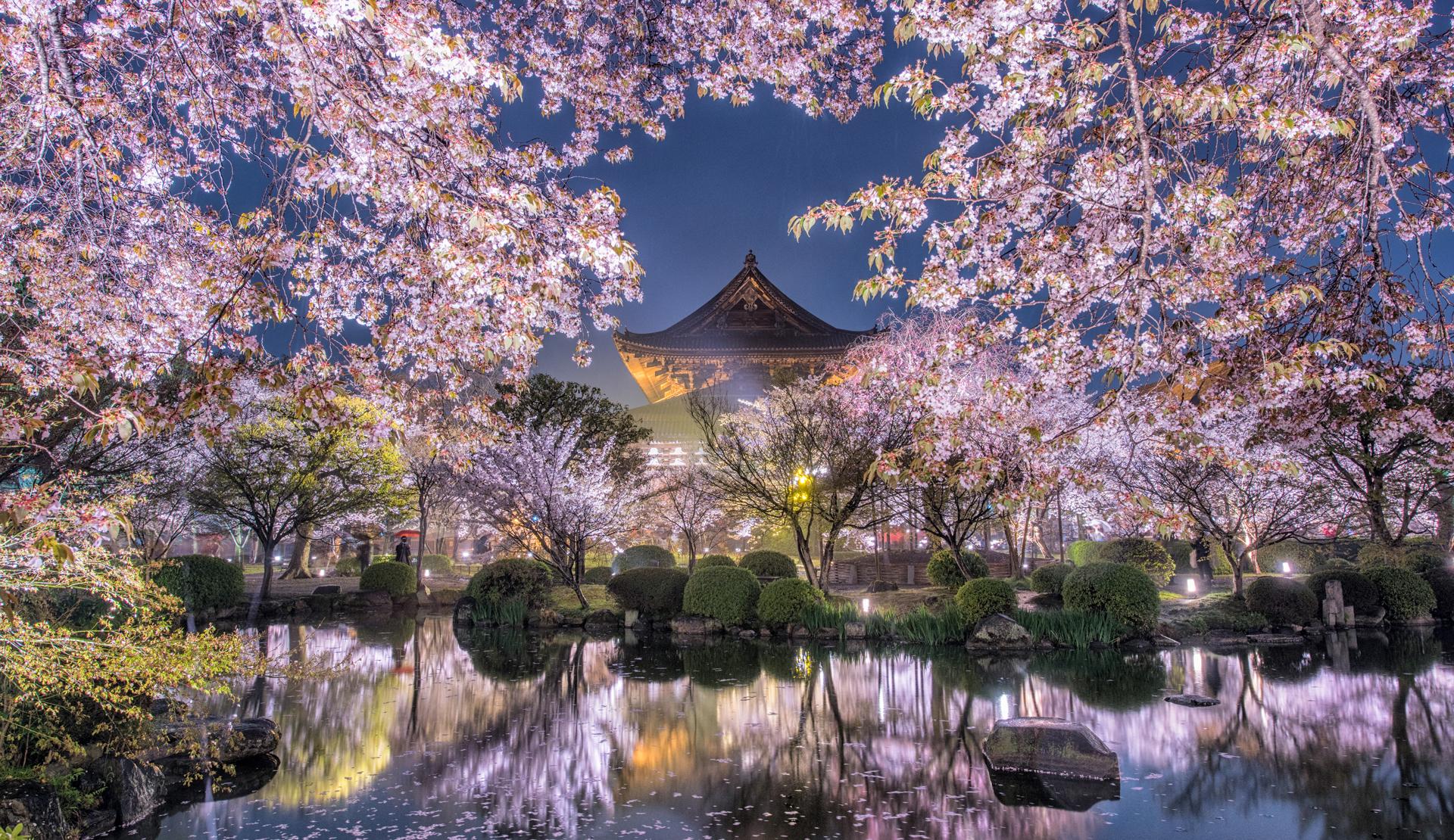 일본 벚꽃 명소 추천