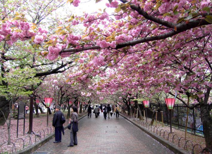조폐박물관 벚꽃축제