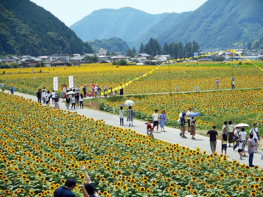 난코 해바라기 축제
