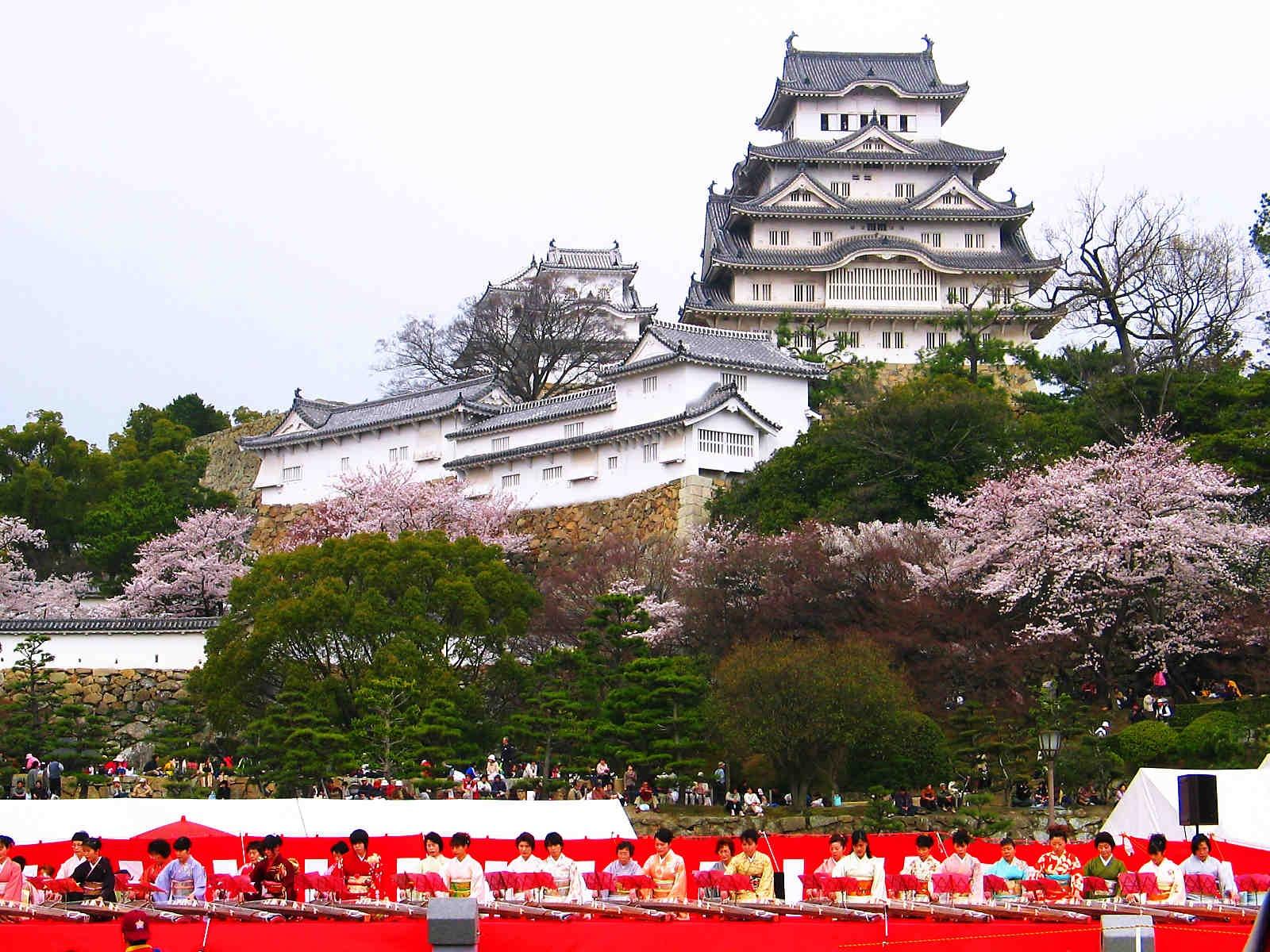 히메지죠 성 벚꽃