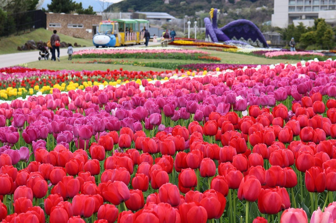 아와지 꽃 축제 가을