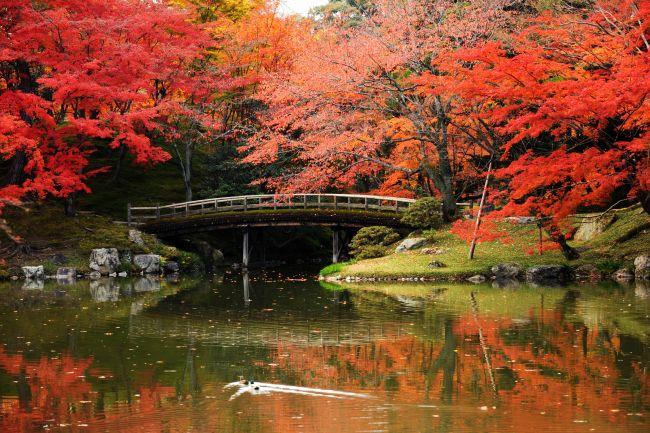 교토 센토고쇼 정원 단풍