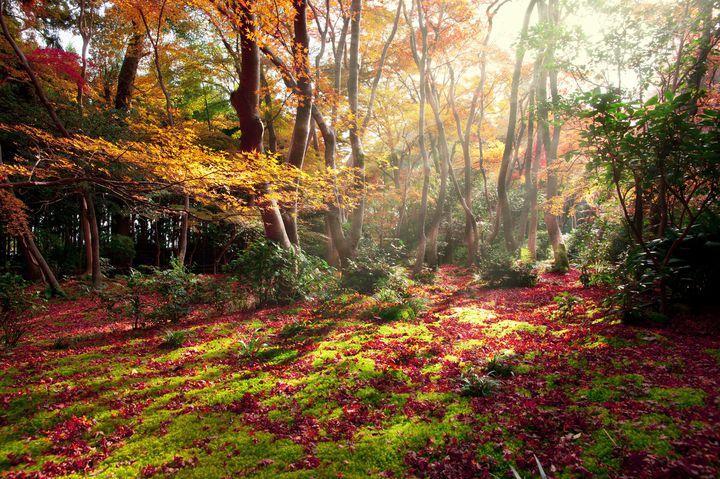 교토 기오지 가을
