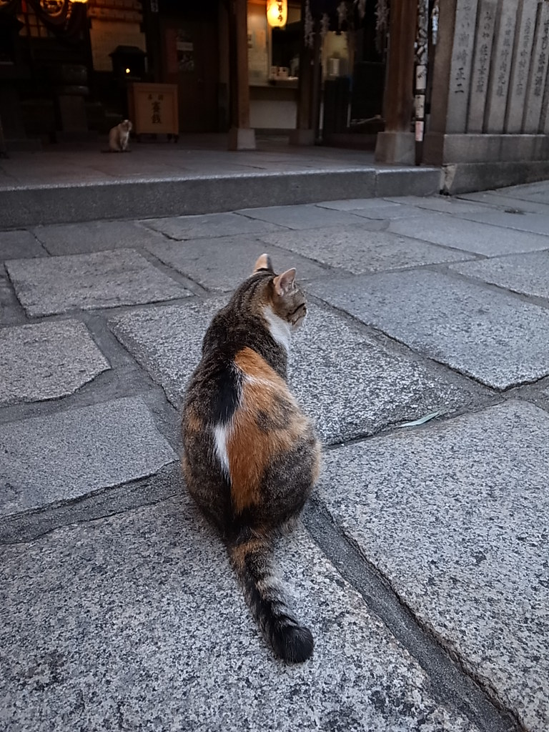 오사카 도톤보리 호젠지 길고양이