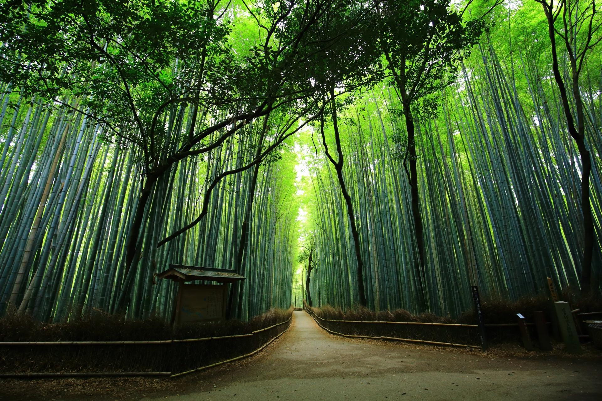 교토 대나무숲