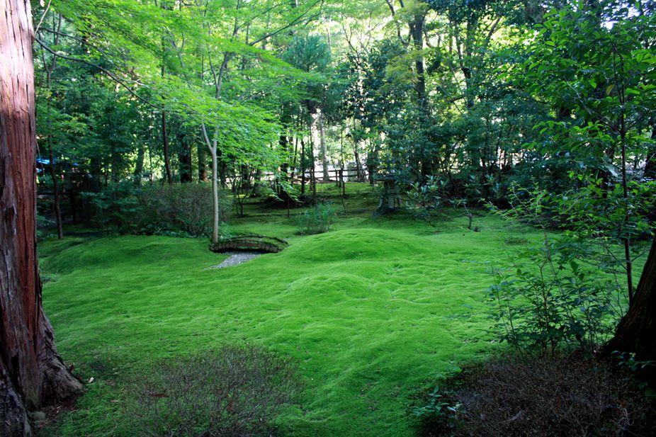 일본 이끼정원