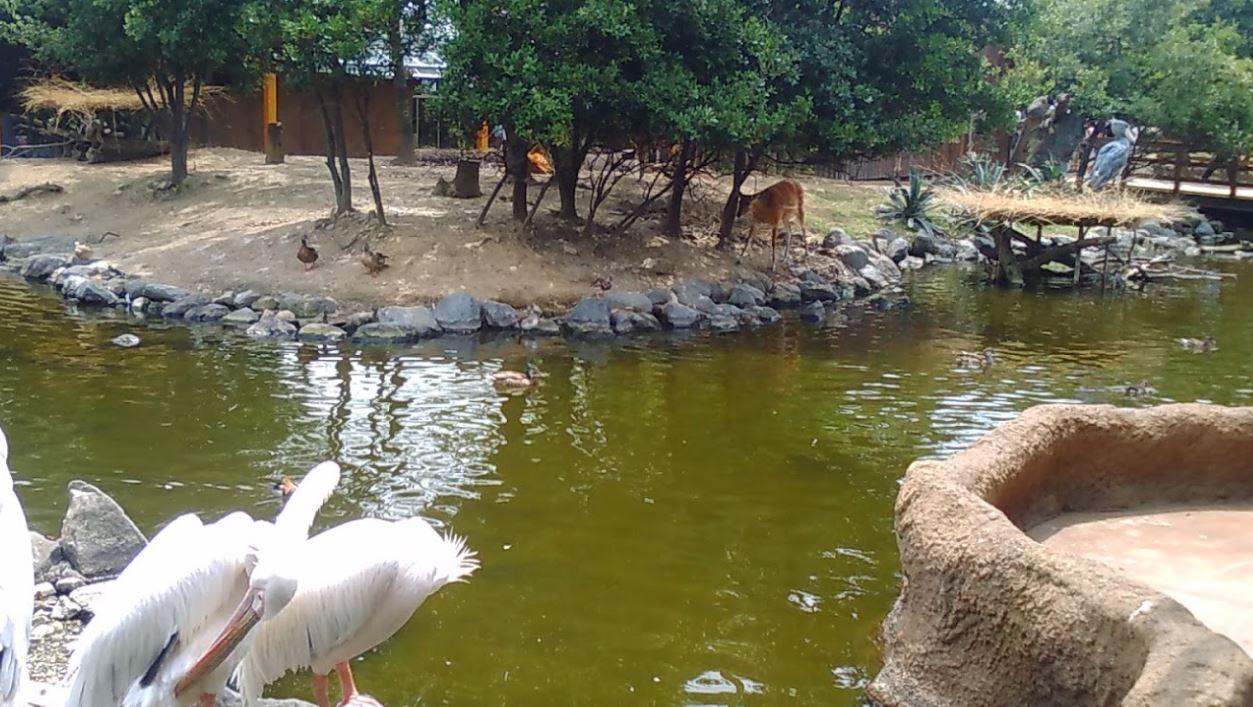일본 동물원 추천