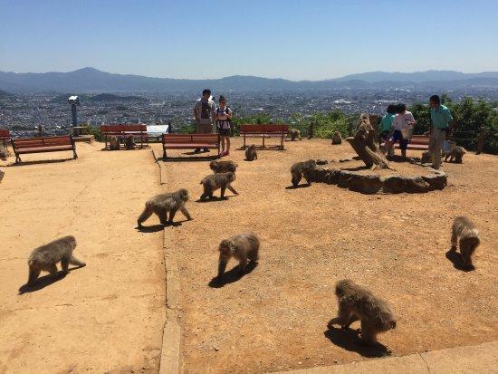 일본 원숭이파크