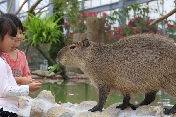 일본 동물원 체험학습