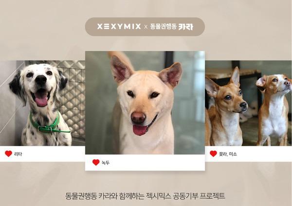 ▲ 젝시믹스, 유기견-유기묘 돕는 '동물권행동 카라'에 매출 1% 기부 (사진=젝시믹스)