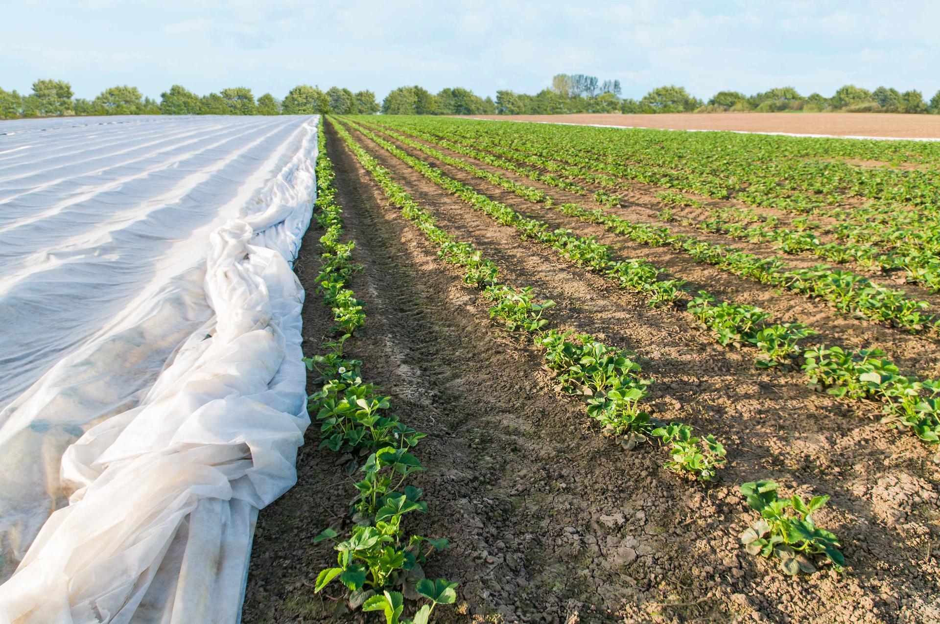 작물 보호에 사용되는 부직포에 내구성 강화에 특화된 바스프의 광안정제가 적용된다.