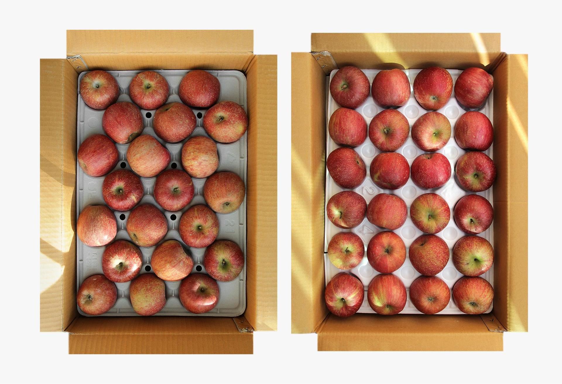사과|후지(富士) : 공씨아저씨네