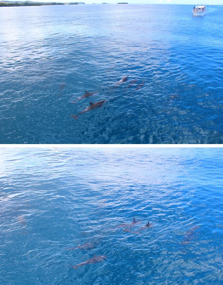 괌 돌고래투어