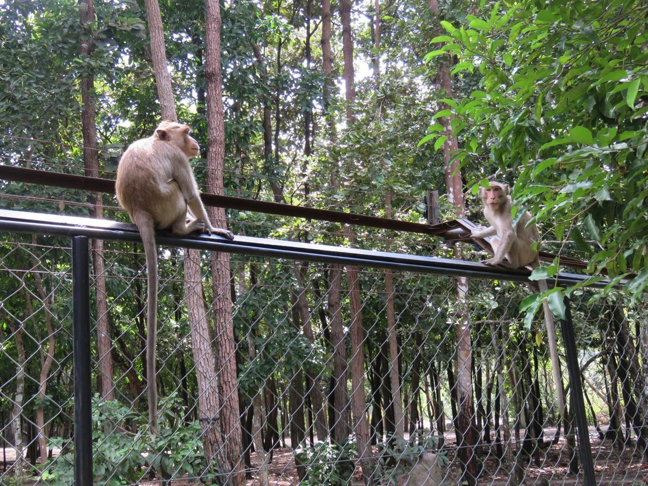 동물공원을 자유로이 돌아다니는 원숭이들.