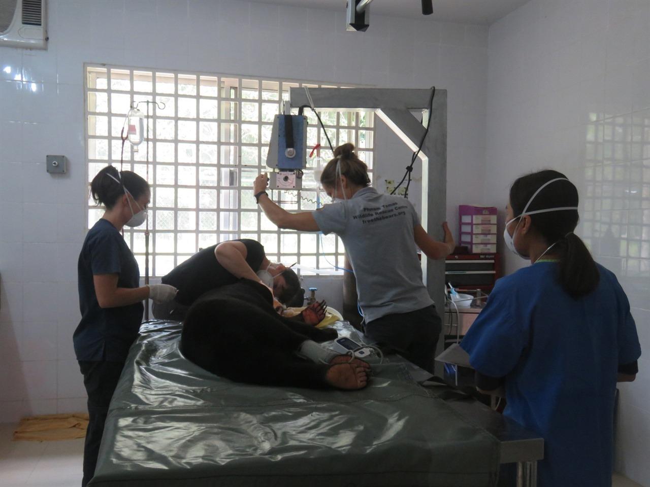 태양곰의 건강상태를 면밀히 확인하는 직원들
