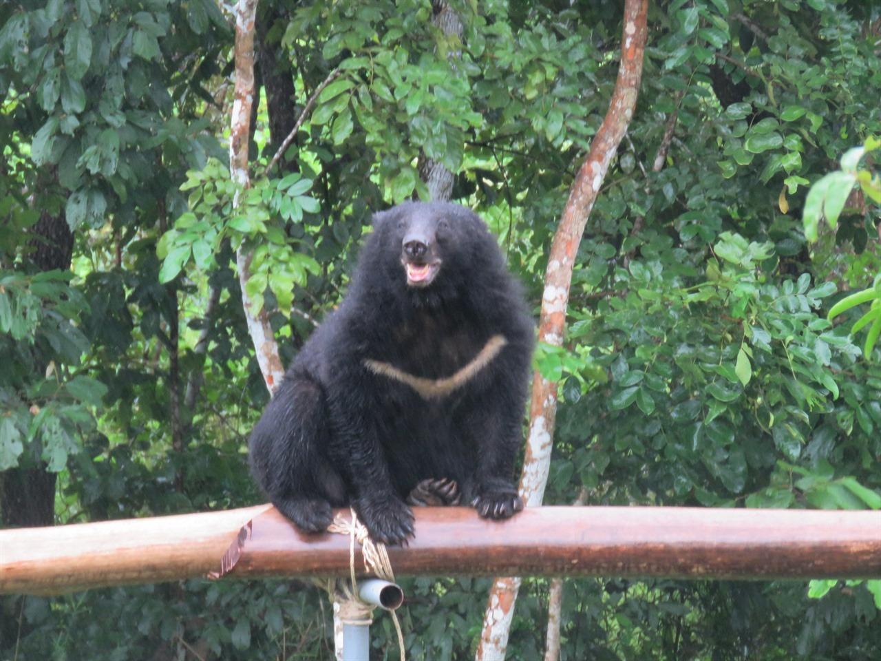 비를 마시며 즐기는 듯한 모습의 반달가슴곰