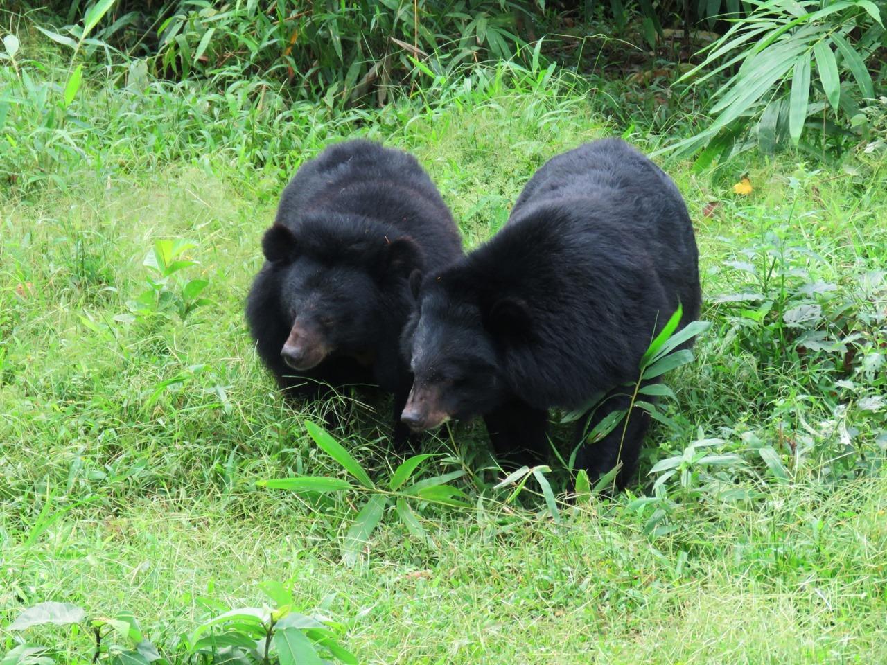서로 가까워진 곰들. 편안히 지내고 있었다.