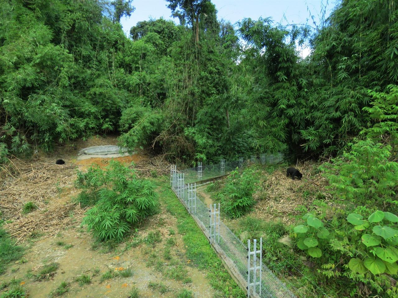 베트남 깟띠엔 국립공원 프리 더 베어스 곰 생츄어리