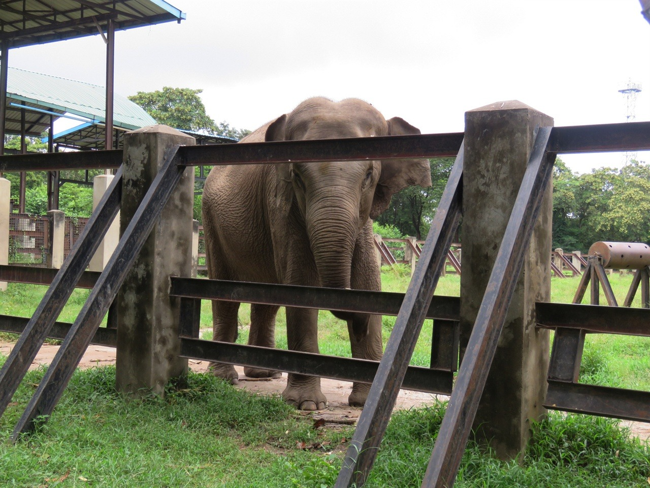 우리에게 긴 코를 휘두르며 물을 계속 뿌리던 코끼리