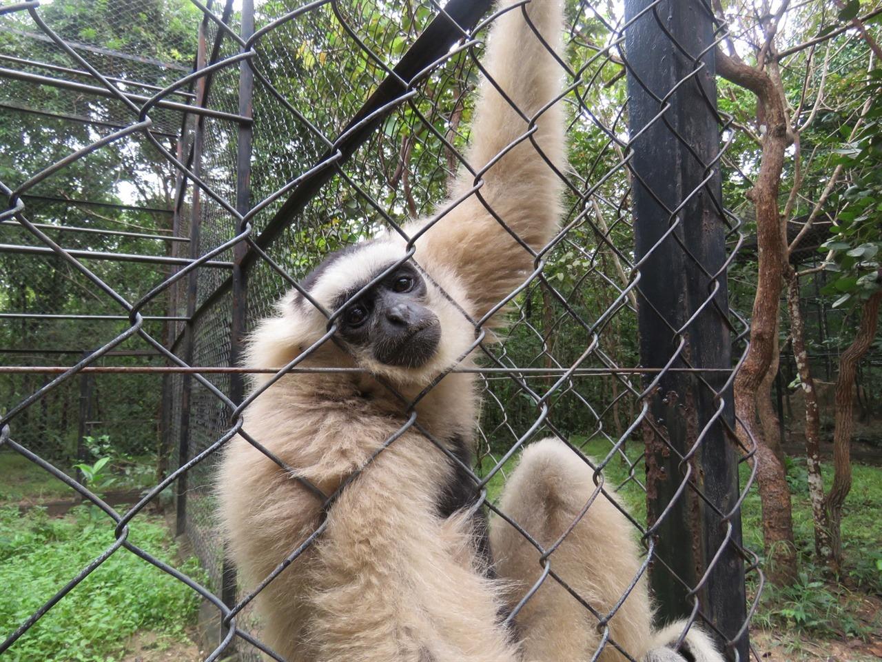 내 손을 잡고 나를 아련하게 바라보는 긴팔원숭이.