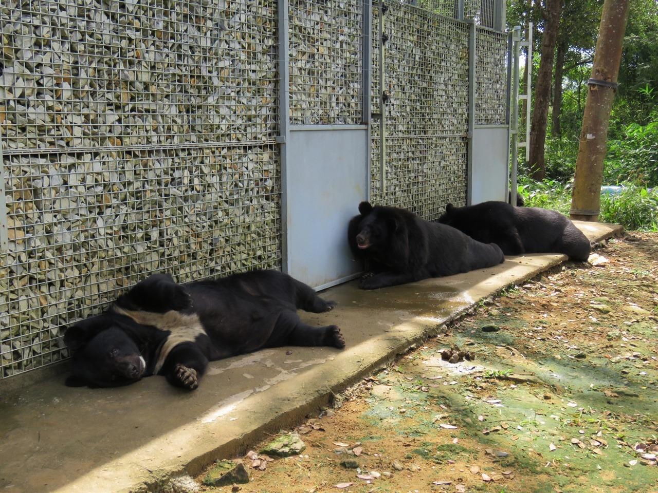 베어하우스 그늘에서 늘어지게 자는 곰들