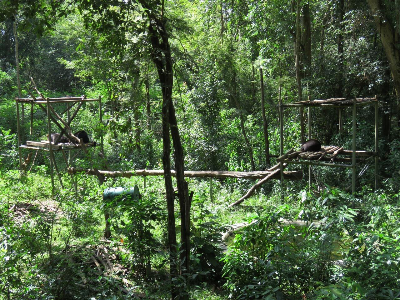 숲을 그대로 유지한 방사장