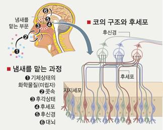 신경계·내분비계에 영향을 주어 정신적·육체적 부조화를 개선